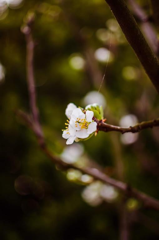 Giornata mondiale della Poesia e primo giorno di Primavera al tempo del Coronavirus             21 marzo 2020